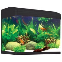 Aqua One AR620 AquaStyle Tank (Gloss Black ) 90L